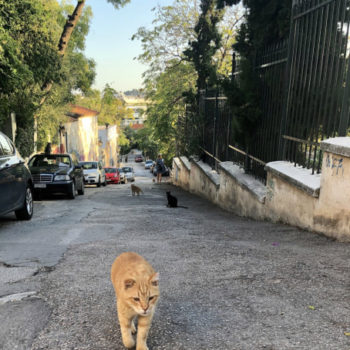 A gorgeous ginger stray cat that any cat fan would love, strutting up the street at feeding time.