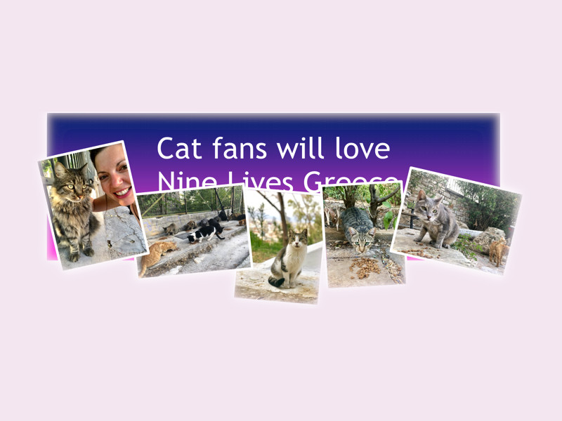 The feature picture for the blog post, 'Cat fans will love Nine Lives Greece' including a collage of cats.