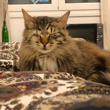 A one-eyed fluffy and cuddly female cat snoozing on a bed