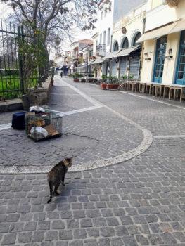 Μια αδέσποτη γάτα στους άδειους δρόμους της Αθήνας, όπου κλειστά μαγαζιά και ταβέρνες σημαίνουν απώλεια πηγής τροφής για τα αδέσποτα.