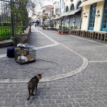 A stray cat in the empty streets of Athens, where closed shops and tavernas mean less food for street cats.