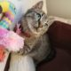 A gorgeous tabby kitten is lying half inside her cat cave and half out, while looking up. She is holding a pink flamingo toy.