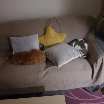 One ginger cat and one white-grey are sleeping next to each other on a sofa.