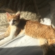 An elegant ginger cat with lovely green eyes is lying on the bed while the sunbeam is bathing her slim figure.