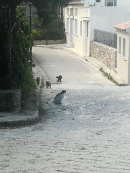 Ένας άδειος δρόμος στη Αθήνα με αρκετές γάτες. Λιγότεροι άνθρωποι τριγύρω για να ταϊζουν τα αδεσποτάκια.