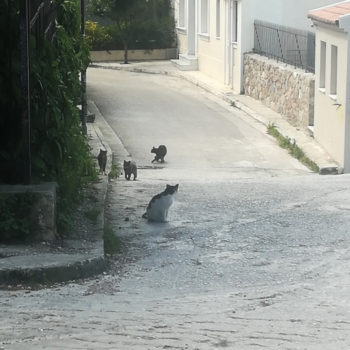 An empty street in Athens with several cats. Fewer people are around to take care of feeding the stray cats here.