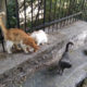 Four strays. Feeding stray cats in Athens is just one things Nine Lives does to help them survive.