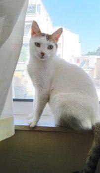 Μια όμορφη γάτα που υιοθετήθηκε από εθελόντρια ύστερα από μήνες σίτισης των αδέσποτων.