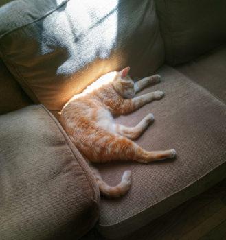 Ένας πορτοκαλί γάτος σε φιλοξενία κοιμάται στον καναπέ ενώ τον λόυζει μια ηλιαχτίδα.