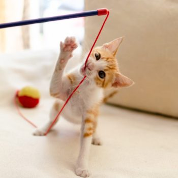 A ginger kitten is playing on a couch with a blue stick toy that has a red and yellow ball attached to his red string.
