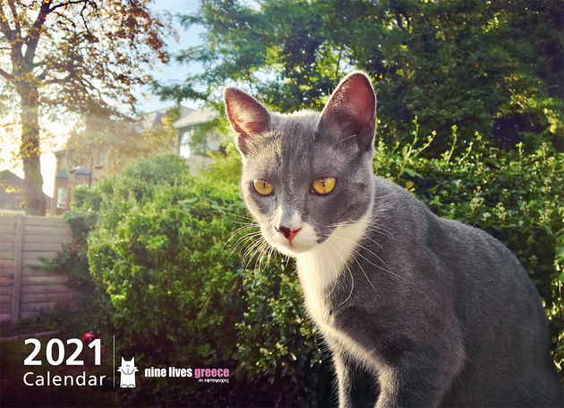 Cover of a calendar featuring a grey-white cat in front of green bushes.