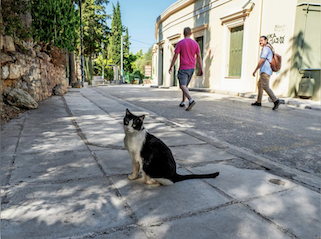 A black and white cat, part of a cat tour of Athens sits on the sidewalk waiting for his feeder
