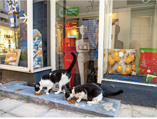 Two black and white cats were seen on a cat tour of Athens eating heartily in front of an art gallery