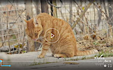 Screenshot from ERTFlix video featuring Nine Lives
