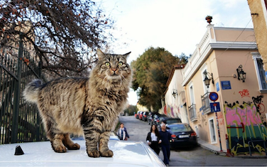 Picture from LIFO article about Nine Lives
