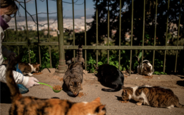 Photo of Nine Lives feeding stray cats as seen in National Geographic online