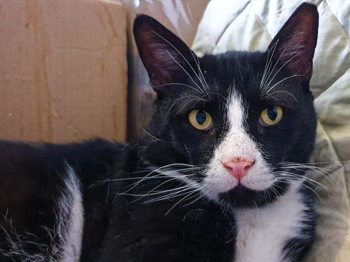 This affectionate cat looks right at us with bright eyes