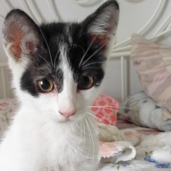 A playful kitten sitting up, ready for some fun