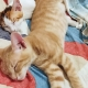 Two rescue kittens for adoption sleeping next to each other