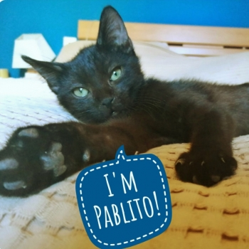 One of two adorable kittens for adoption with a word bubble stating his name.