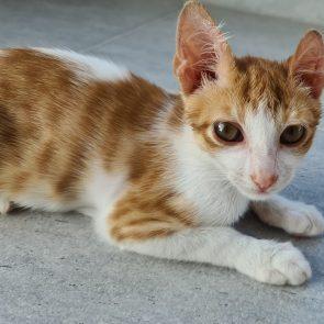 Κοντινό σε ένα αξιολάτρευτο τιγρέ γατάκι με πράσινα μάτια.
