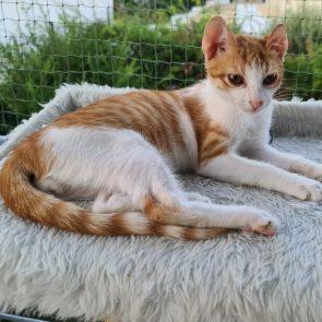 Ένα γλυκό πορτοκαλί γατάκι ξαπλώνει σε ένα χνουδωτο κρεβάτι έξω σε μπαλκόνι με δίχτυ.