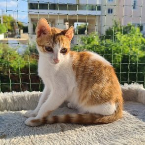 Ένα αξιολάτρευτο πορτοκαλί γατάκι κάνει ηλιοθεραπεία πάνω σε ένα γατόδεντρο που είναι έξω σε ένα προστατευμένο μπαλκόνι.