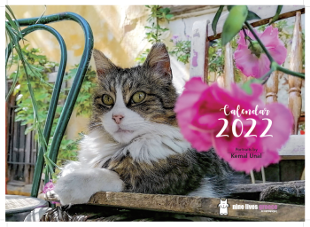 The front cover of a calendar featuring a fluffy tabby cat sitting on a wooden bench