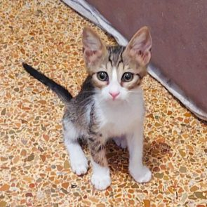 One of two kittens looking for a home.
