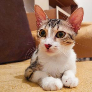 This pretty kitty is one of two kittens looking for a home