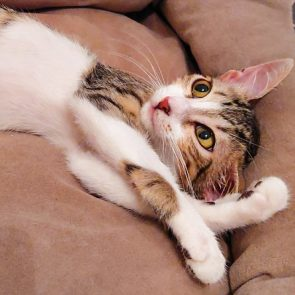 This is one of two kittens looking for a home, relaxing on a beige couch