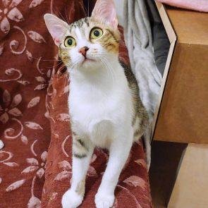 This young cat is one of two kittens looking for a home.