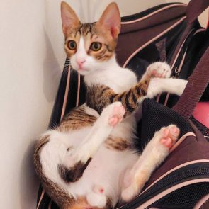 This is one of two kittens looking for a home. He lying on his back and twisting to see what is happening