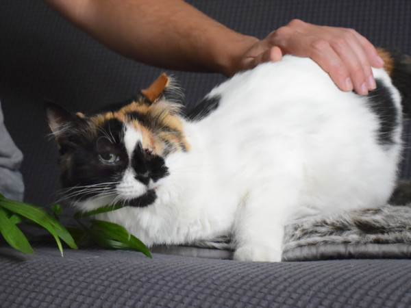 A one-eyed cat that needs a home receives caresses from a human