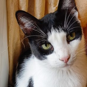 A black and white cat looking for a home. He has gorgeous green eyes