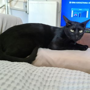 A tender panther is sitting on the arm of a couch while the tv is on.