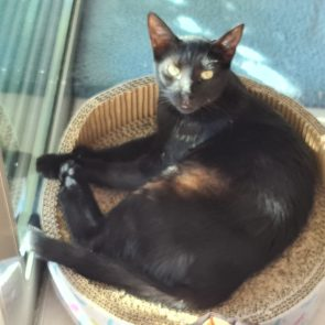 A panther is sitting by the window inside a cat scratcher that also works as a bed.