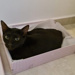 A black panther is sitting inside a fabric box.