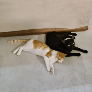 A tender black panther with a ginger younger one, are sitting close to each other against a wooden bed.