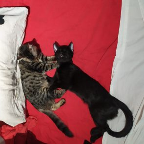 Two kittens are sleeping peacefully on a red bedsheet.